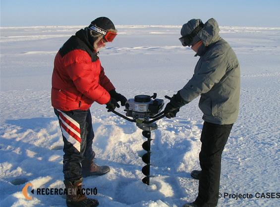 Perforador de gel