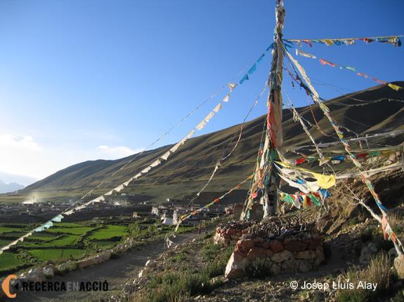 Camps a Wombu