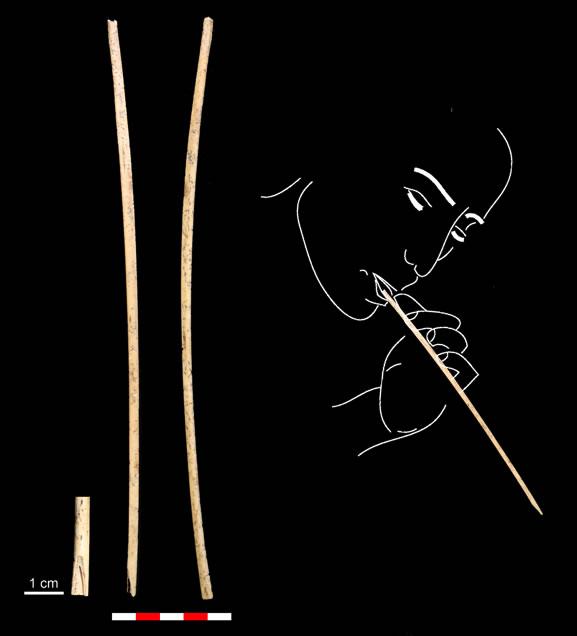 Dibuix d'un pal xarrupador yámana